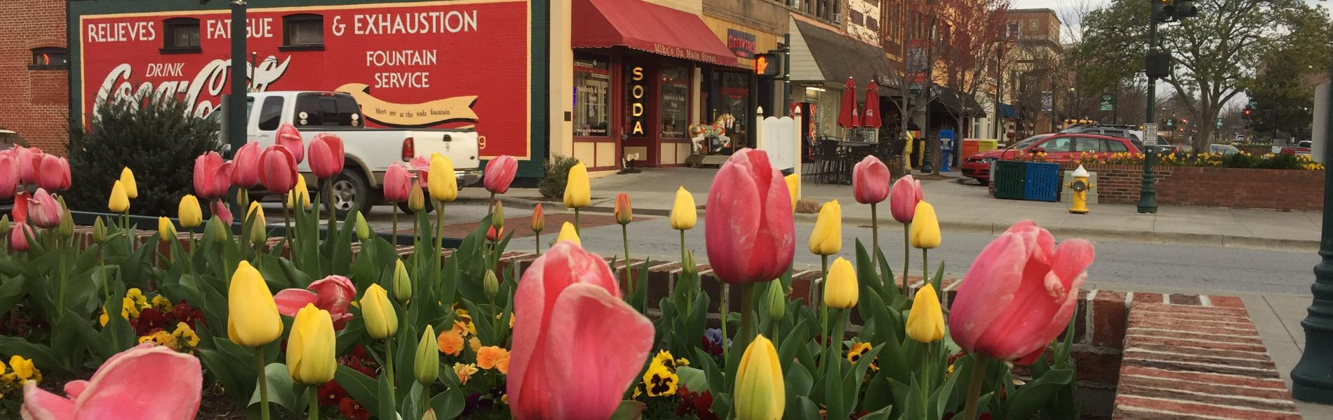 tulips in downtown hendersonville