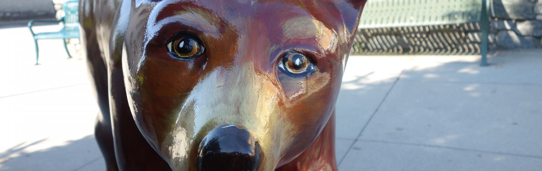 Bear Auction 2021