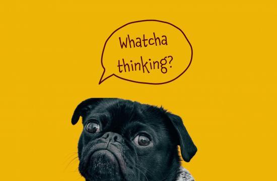 black dog on yellow background