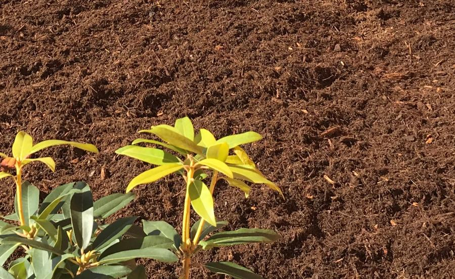 mulch with plant